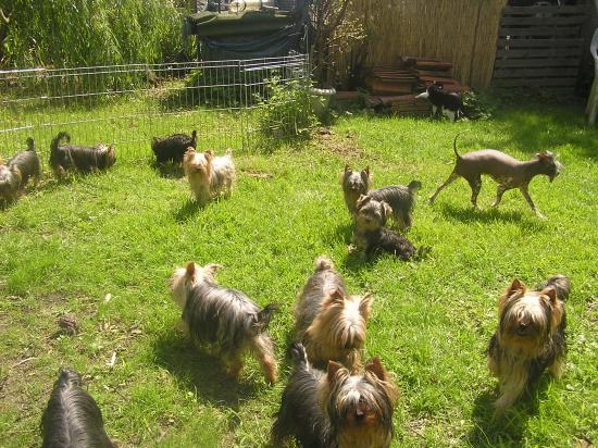 Sur la pelouse..la famille s'amuse!