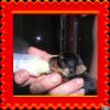 Mes Yorkshire terriers.Photos diverses